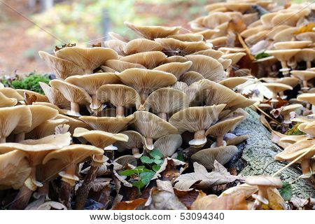 Group of mushrooms - mycology