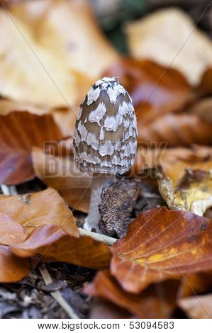 Magpie Inkcap - foliage
