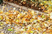 stock photo of leaf-blower  - clearing of urban street from autumn leaves by leaf blower - JPG
