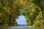 foto of twisty  - Asphalt road among autumn trees which shape a fall color tunnel - JPG