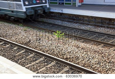 Of the nature in the middle of rails, young plant in urban zones (France)