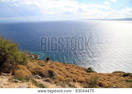 Strait Edermit