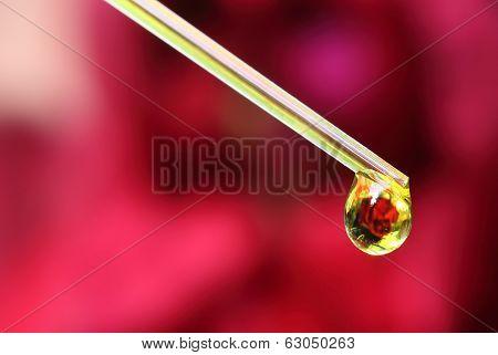 Herbal Drop