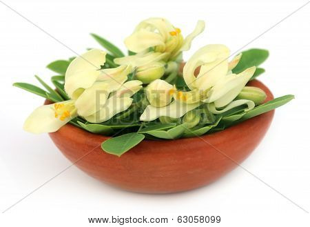 Edible Moringa Flower With Leaves