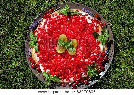 Cake On Grass