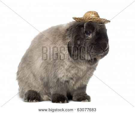 Lop rabbit wearing a hat, isolated on white