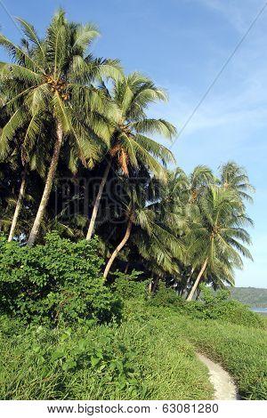 Footpath Near Plantation