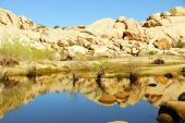 Joshua Tree National Park - Reflection Water