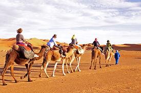 stock photo of sahara desert  - Camel caravan going through the sand dunes in the Sahara Desert - JPG