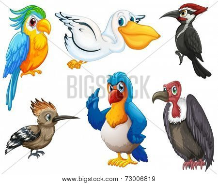 Illustration of different kind of birds