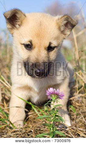 Puppy Smelling Pink Flower