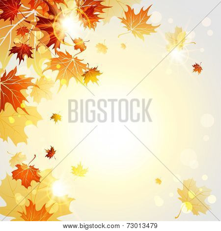 Fall maple leaves on sunny light background. Vector illustration