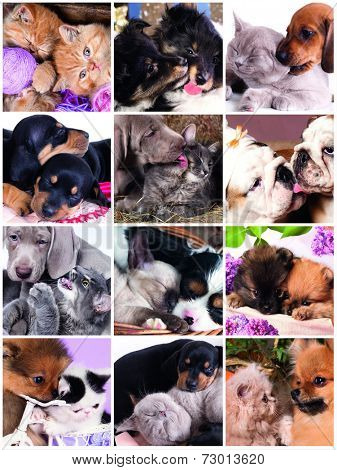 Funny kissing kittens and puppies