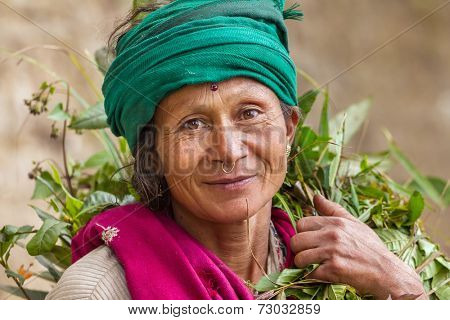 DARJEELING, INDIA - MARCH 17: Portrait of an  unidentified woman tea picker March 17, 2013 in Darjeeling, India.
