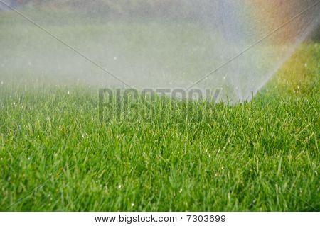 Arco-íris e aspersor de grama