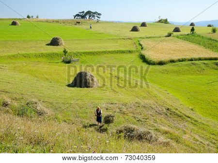 KAMENA GORA - SERBIA - AUGUST 14, 2014: agricultural work in the green fields of Kamena Gora highland.