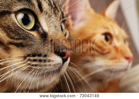 Two cats closeup
