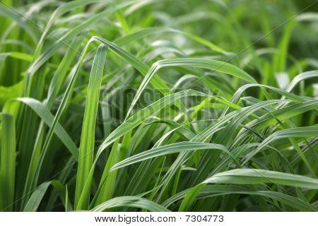 Light on a grass