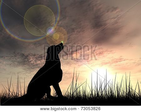 Concept or conceptual young beautiful black cute dog silhouette in grass or meadow over a sky at sunset landscape background