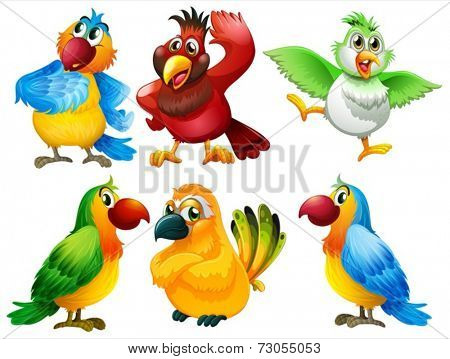 Illustration of different color of parrots