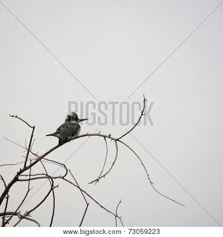 an artistic shot of a tiny kingfisher sitting on a small branch on a gloomy foggy day in the winter