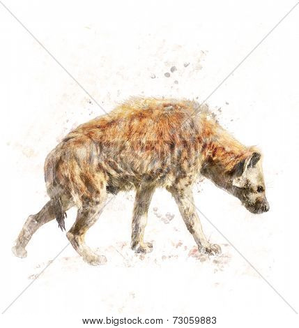 Watercolor Digital Painting Of Spotted Hyena