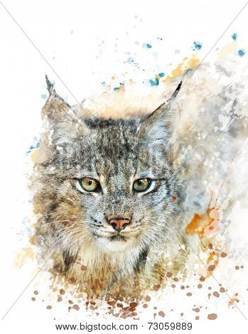 Watercolor Digital Painting Of  Canada Lynx