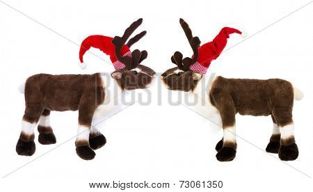 Animal love: two reindeer or elk with santa hat for christmas decoration
