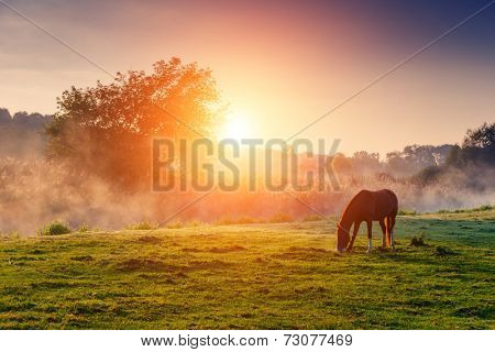 Arabian horses grazing on pasture at sundown in orange sunny beams. Dramatic foggy scene. Carpathians, Ukraine, Europe. Beauty world.