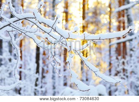 Sunrise in snow winter forest