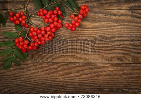 Red mountain ash or rowan berries on rustic wooden background