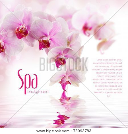 subtle spa/wellness background with orchid flowers