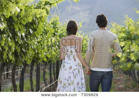 Young couple in vineyard back view