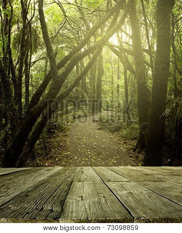 Wooden deck in tropical forest