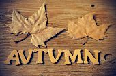 stock photo of northern hemisphere  - wooden letters forming the word autumn and some autumn leaves on a weathered wooden background - JPG
