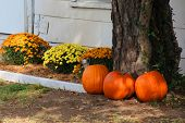 stock photo of fall decorations  - Lots of pumpkins and other decorations for fall season near a cozy house - JPG