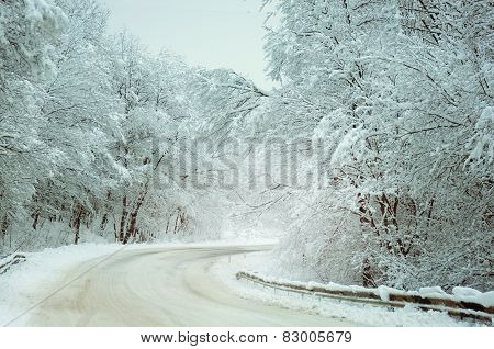 Road  With Snow-covered Trees