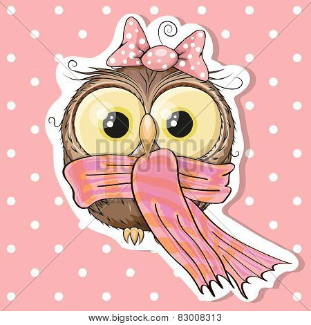 Owl In A Scarf
