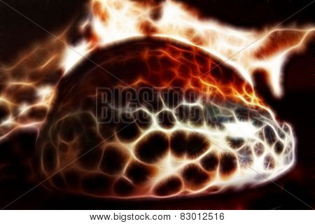 Marine Sea Shell  With Fractal Effect On Black Background