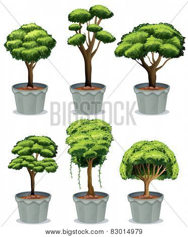 Illustration of six potted plants