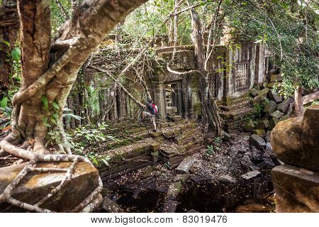 Men  hiking  in  the tropical rainforest