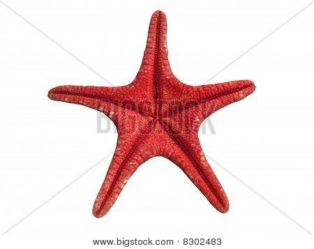 Red Seastar