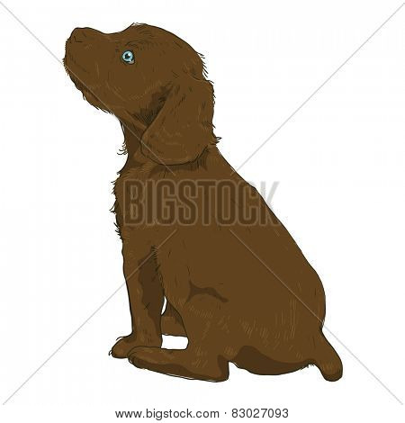 Little puppy on a white background. Vector illustration of a dog in the style of drawing