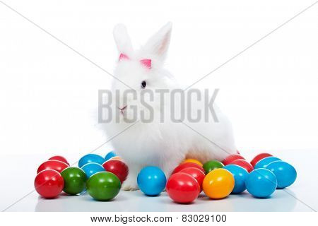 Cute white easter bunny among colorful eggs - isolated