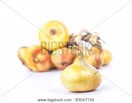 one onion on the background of a bunch of several brown onions