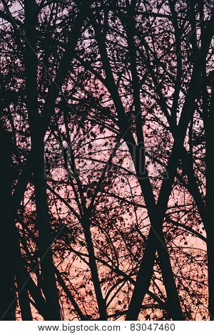 Trees Background Over Pink Sunset