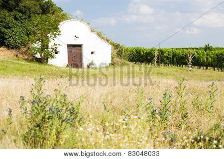 wine cellar with vineyard, Novy Prerov, Czech Republic