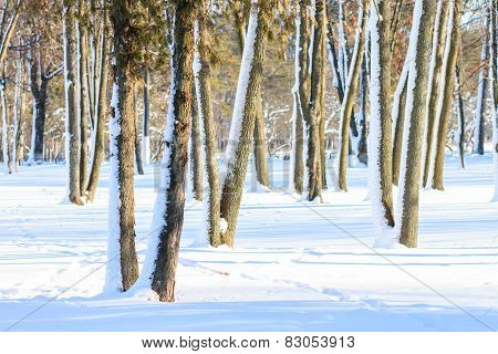 Snowy Trees At Sunny Winter Day