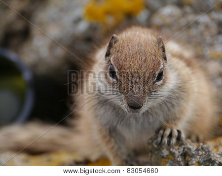 A close up of a squirrel