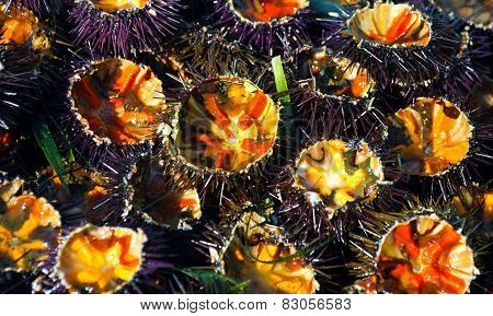 freshly cut sea urchins at the fish monger.
